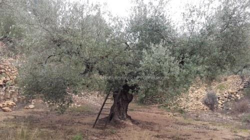 olijf1blog